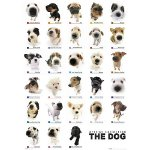 The Dog Collection  Постер 64х90см