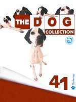 The Dog collection № 41 : Английский пойнтер