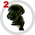 The Dog Collection 2 выпуск