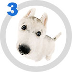 The Dog Collection 3 выпуск