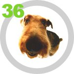 The Dog Collection 36 выпуск