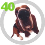 The Dog Collection 40 выпуск