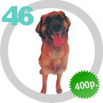 The Dog Collection 46 выпуск