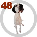 The Dog Collection 48 выпуск