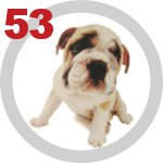The Dog Collection 53 выпуск