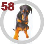 The Dog Collection 58 выпуск