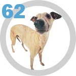 The Dog Collection 62 выпуск