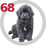 The Dog Collection 68 выпуск