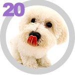 The Dog Collection 20 выпуск