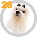 The Dog Collection 26 выпуск