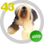 The Dog Collection 43 выпуск
