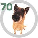 The Dog Collection 70 выпуск